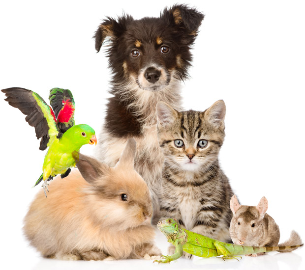 animaux domestiques chien chat nac