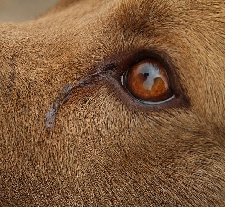 Ophtalmologie vétérinaire chiens et chats à Guyancourt