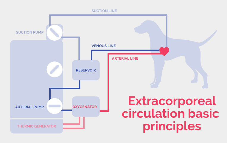 illustration simplifié de la machine circulation extra-corporelle à la Clinique vétérinaire Hopia Versailles Grand Parc